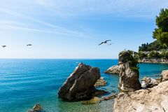 Fåglar av havet Royaltyfria Foton