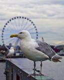 Fåglar av pir 57 fotografering för bildbyråer