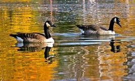Fåglar av skönhet Royaltyfri Foto