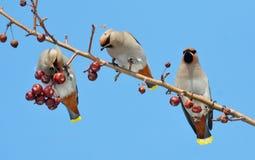 Fåglar av stäpparna Arkivfoton