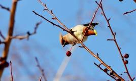 Fåglar av stäpparna Arkivbild