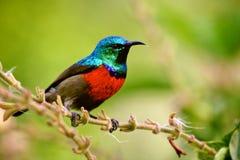 Fåglar av Tanzania royaltyfri foto