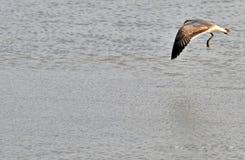 Fåglar av våtmarkerna av knivsmeden Bay arkivfoton