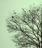 Fåglar av vintern arkivfoton