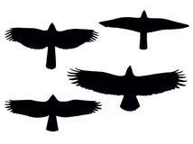 fåglar ber Royaltyfri Fotografi