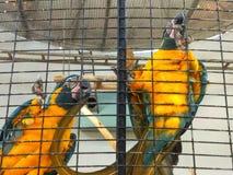 Fåglar - djur & djurliv royaltyfri bild