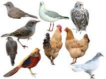 Fåglar en samling Arkivbilder