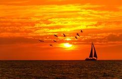 Fåglar för havsolnedgångsegelbåt Royaltyfri Foto