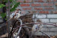 Fåglar förgrena sig på Fotografering för Bildbyråer