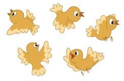 fåglar fem som flyger Arkivfoton