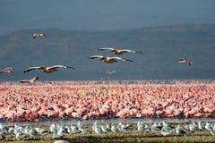 fåglar flockas stort wild Arkivbild