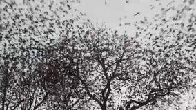 Fåglar flyger bort arkivfilmer