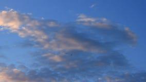 Fåglar flyger högt i himlen på solnedgången stock video