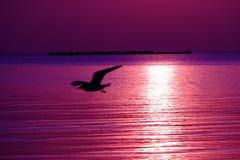 Fåglar flyger tillbaka till redet Arkivbild