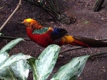 Fåglar från ljusa färger för fågelkungarike Arkivbilder