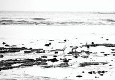 Fåglar - häger och ägretthäger - i vatten - naturlig bakgrund Arkivbilder