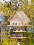 fåglar house multistoried Fotografering för Bildbyråer