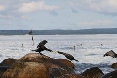 Fåglar I Fotografering för Bildbyråer