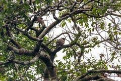 Fåglar i amazons Royaltyfri Foto