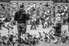 Fåglar i Amsterdam Arkivbild