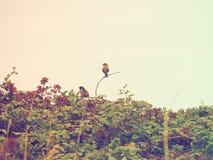 Fåglar i björnbärsbuskarna Arkivbilder