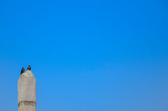 Fåglar i blåttskyen Royaltyfri Bild