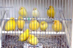 Fåglar i bur royaltyfri fotografi