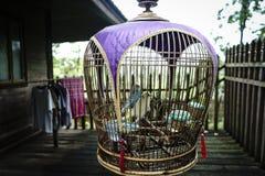 Fåglar i bur på det antika thailändska huset Royaltyfria Bilder
