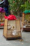 Fåglar i burar Royaltyfri Foto