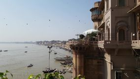 Fåglar i den Varanasi floden arkivfilmer