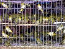 Fåglar i en bur Royaltyfri Foto