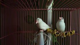 Fåglar i en bur Royaltyfri Bild