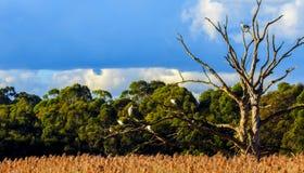 Fåglar i ett träd Fotografering för Bildbyråer