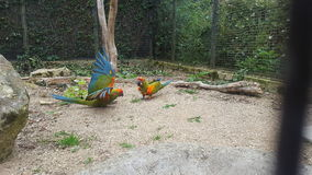 Fåglar i flyg Arkivbilder