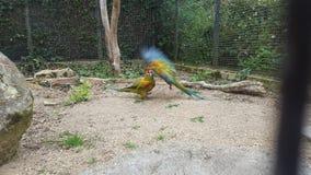Fåglar i flyg Royaltyfri Foto