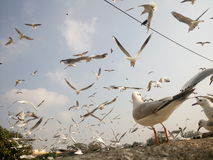 Fåglar i flyg Arkivfoto