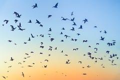 Fåglar i himlen under solnedgång royaltyfri foto