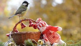 Fåglar i jul stock video
