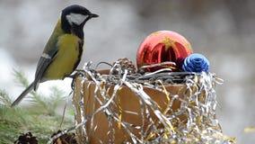 Fåglar i jul arkivfilmer