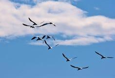 Fåglar i lagun för ³ n för Jökulsà ¡ rlà Arkivbilder