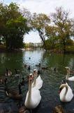 Fåglar i mörker - blått - grönt vatten Royaltyfri Foto