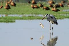 Fåglar i natur Arkivbild