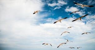 Fåglar i paradis Arkivbilder