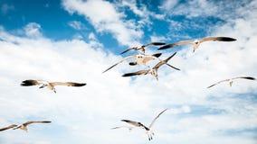 Fåglar i paradis Arkivfoton
