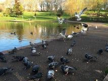 Fåglar i parkera arkivfoton