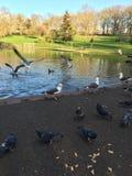 Fåglar i parkera royaltyfri bild