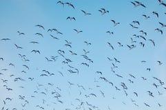 Fåglar i skyen arkivbilder