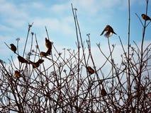 Fåglar i skyen Arkivbild