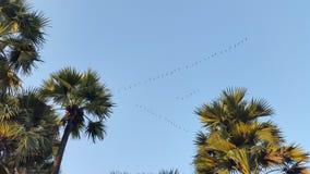 Fåglar i skyen royaltyfria foton