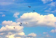 Fåglar i skyen Royaltyfri Bild